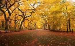 مراقبت هایی که از دید طب سنتی در فصل پاییز باید داشته باشیم!