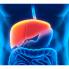 یک هورمون کبدی در ایجاد چاقی و دیابت نقش دارد